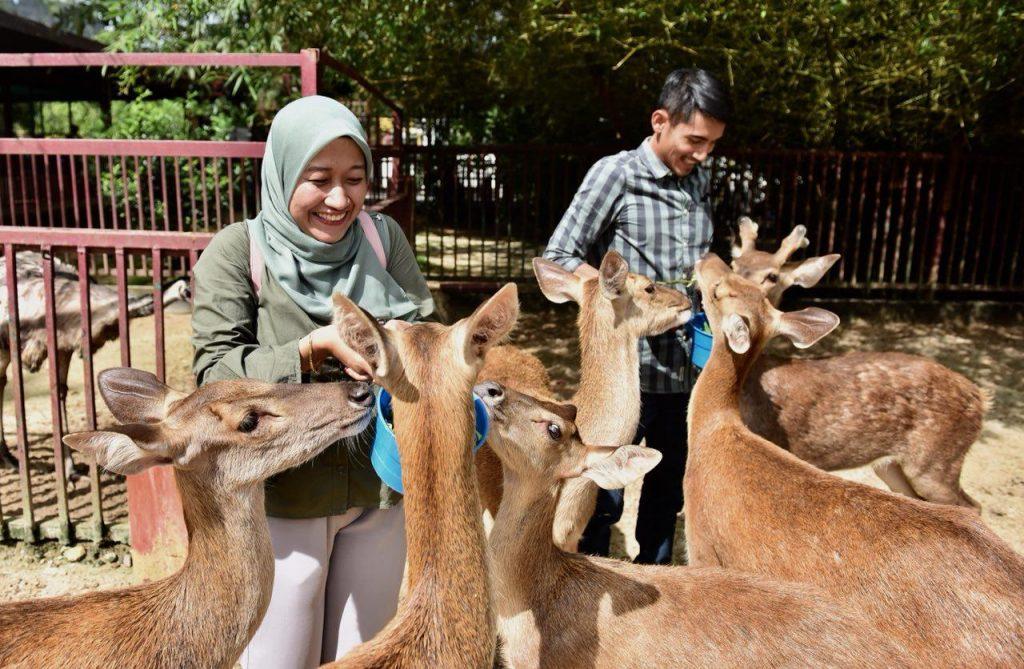 Timorensis Deer | Langkawi Wildlife Park