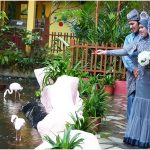 Wedding Photoshoot at Langkawi Wildlife Park