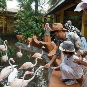 Flamingo | Langkawi Wildlife Park