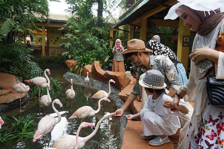 Flamingo | Langkawi Wildlife Park