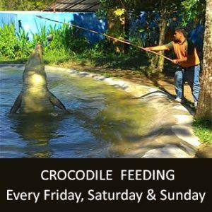 crocodile-img (1)