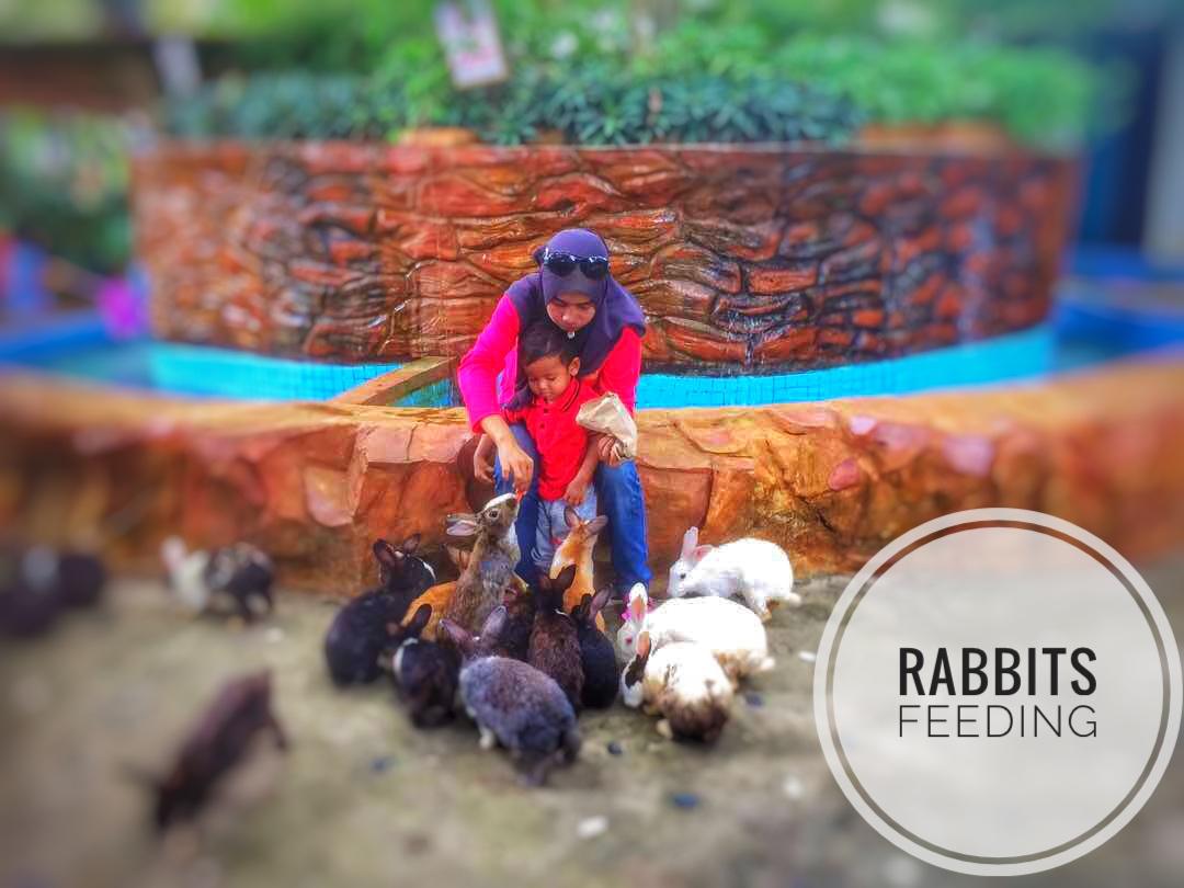 Rabbits Feeding   Langkawi Wildlife Park