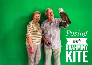 Photos with Brahminy Kite | Langkawi Wildlife Park