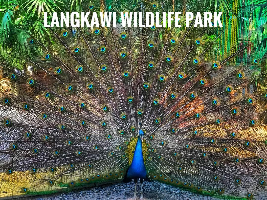 Things to do in Langkawi Wildlife Park | Langkawi Wildlife Park