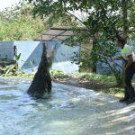 Crocodile | Langkawi Wildlife Park
