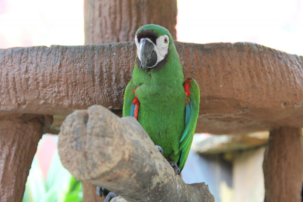 Mini Macaw | Langkawi Wildlife Park