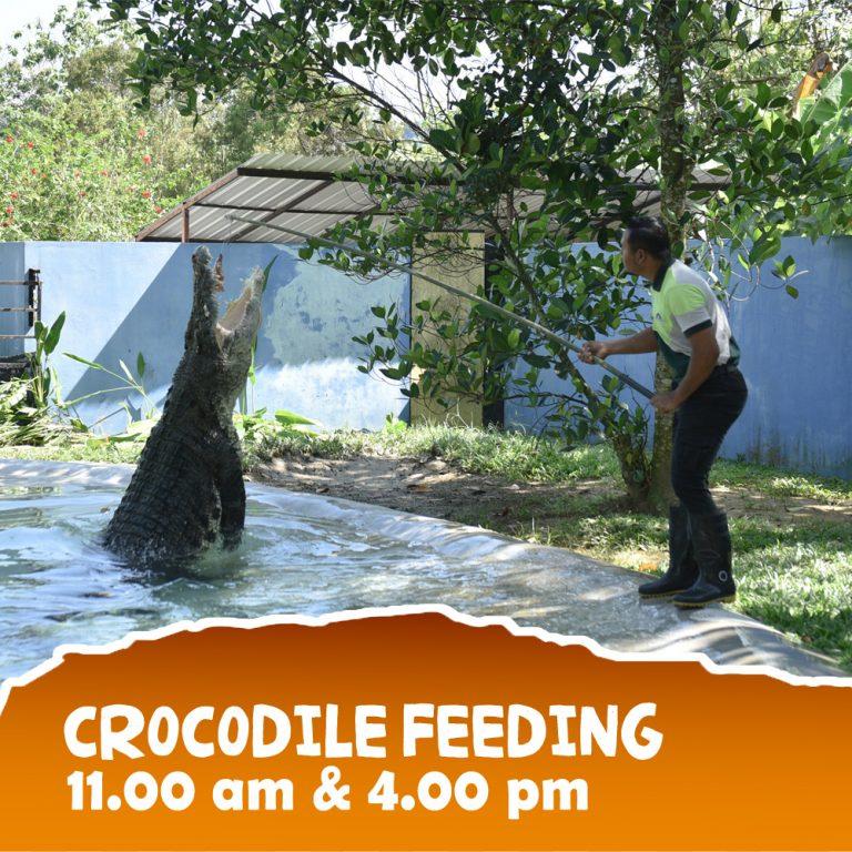 Crocodile-3 copy