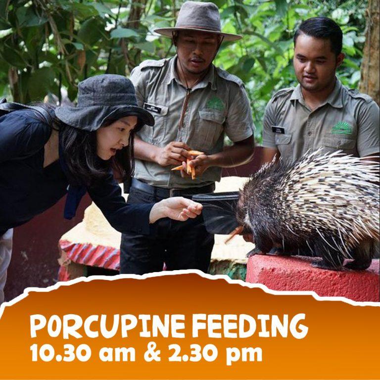 Porcupine-3 copy