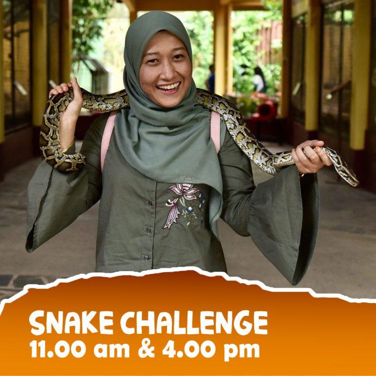 Snake-3 copy