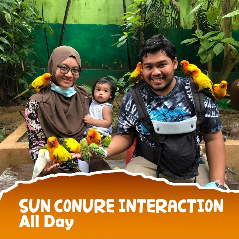 Sun Conure-3 copy